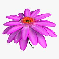 Daisy Flower Animated 3D model