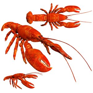3D rigged low poly lobster