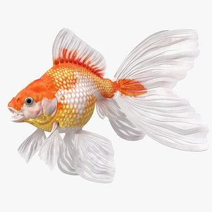 White Goldfish Aquarium Fish Rigged for Maya 3D model
