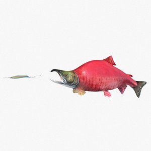3D sockeye salmon fish