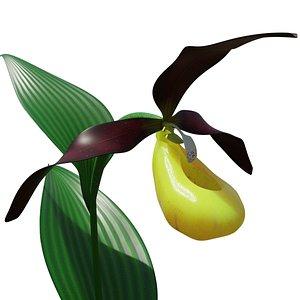 3D cypripedium lady s-slipper orchid