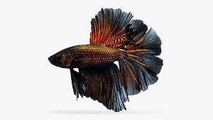 3D model betta fish