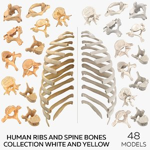 3D Human Ribs and Spine Bones Collection White and Yellow - 48 models