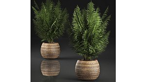 basket palm 3D model