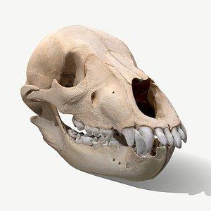 3D model skull bear