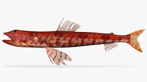 Calico Lizardfish 3D model