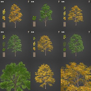 2021 PBR Kentucky Coffee Tree Collection - Gymnocladus Dioicus 3D