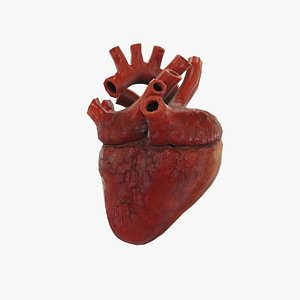 heart rigged animate 3D model