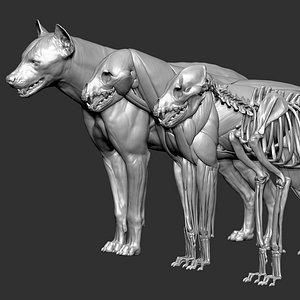 HyenaVFXMUSCLESIMULATION 3D model