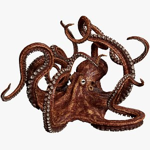 3D Octopus Multicolor Rigged Animated