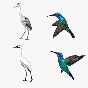 Special Bird Collection 3D