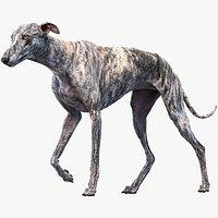Greyhound 2 Animated