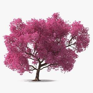 3D model Pink Trumpet Tree Big