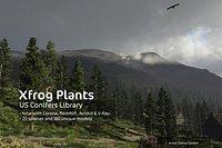 2020 XfrogPlants USA Conifers Library