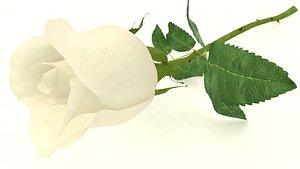 3D roses petal model
