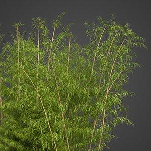 bamboo e model