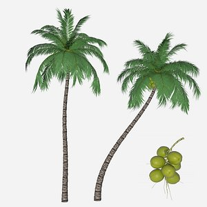 3D coconut palm branch model