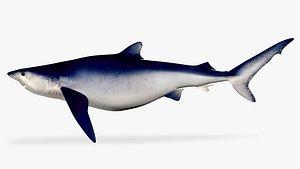 3D model blue shark