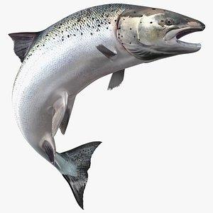 salmon jump pose atlantic 3D