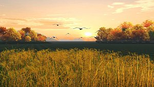 Scenery sunset sunset Bird Goose Wetland Park model