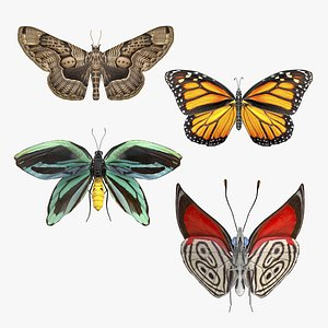 Animated Butterflies Rigged Collection model