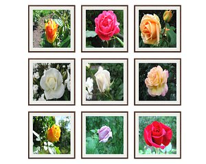 3D pictures flowers photo