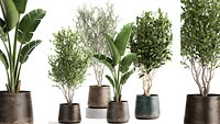 Houseplants in a flowerpot for the interior 949