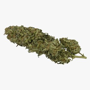 cannabis cola model