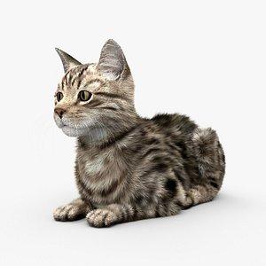 3D model Lying Cat HD