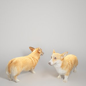 3D young corgi dog animals model