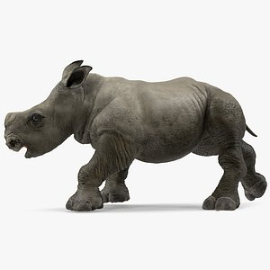 baby rhino rigged modo 3D