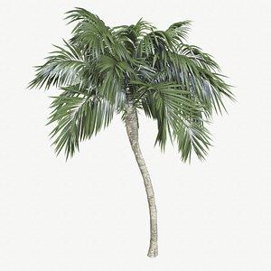 palm tree coconut 3D model