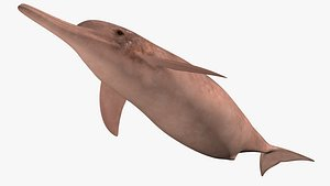 River Dolphin 3D