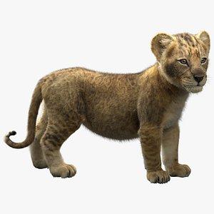3D realistic rigged lion cub