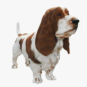 basset hound dog model