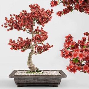 sakura bonsai tree 3D model