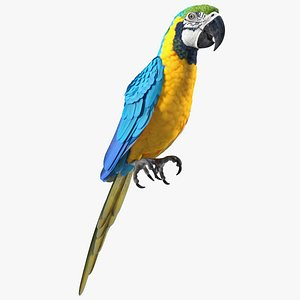 3D model Blue and Yellow Macaw Parrot Sitting Pose