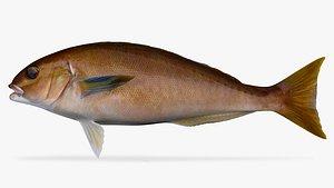 3D Ocean Whitefish model