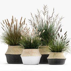3D Ornamental reeds plants in rattan baskets 1028 model