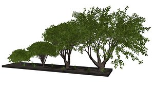 3D Trees and bushes