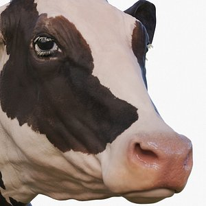 holstein cow zbrush 3D