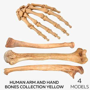 3D Human Arm and Hand Bones Collection Yellow - 4 models