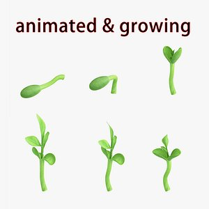 3D germination seed model