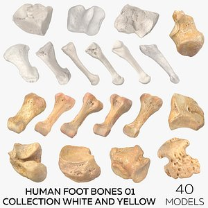 Human Foot Bones 01 Collection White and Yellow - 40 models model