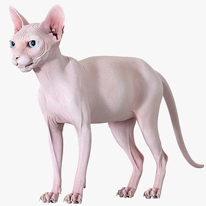 3D Sphynx Cat Pink