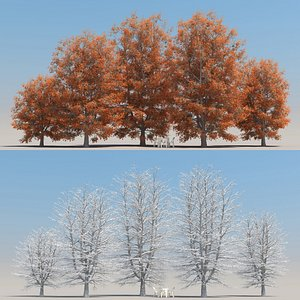 3D summer sugar maple tree model