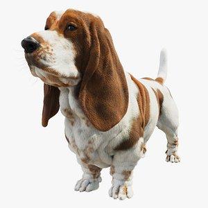 basset hound dog 3D model