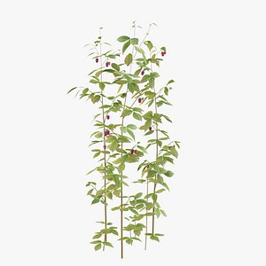 raspberry thicket berry 3D