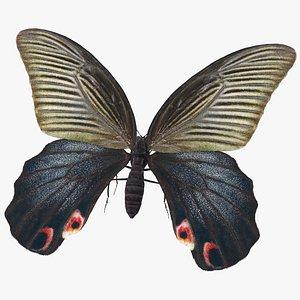 Papilio Protenor Butterfly Female model