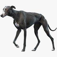 Greyhound 3 Animated